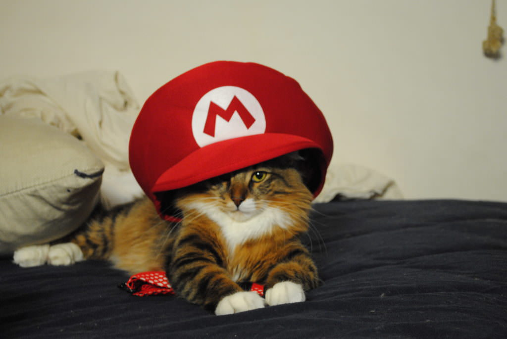 15 Silly Cats Wearing Hats