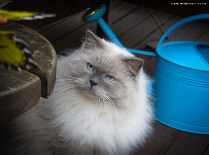 PRINCE IHEARTCATS 17 AUG 2015 Prince Watering Can-19