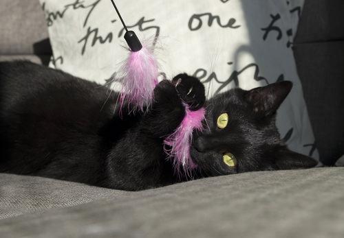 cat aviation