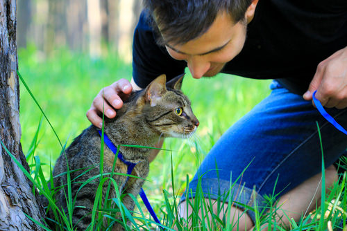 can female cats spray if they are spayed