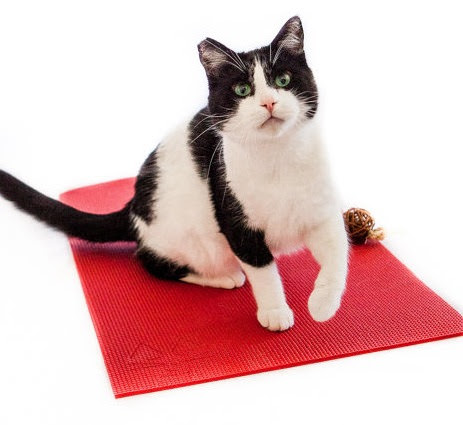 Image source: Feline Yogi