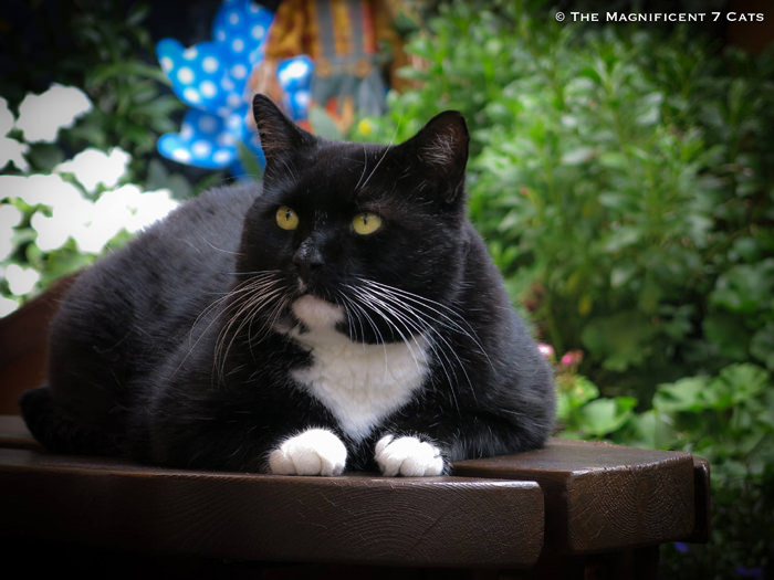 1 Rocky M7 for iheartcats 10 Sept 2015