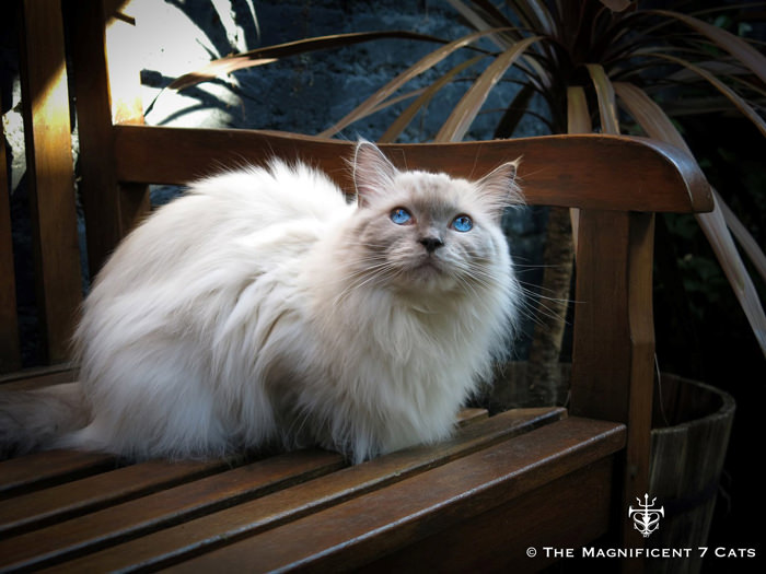 2 Pixie M7 for iheartcats 10 Sept 2015