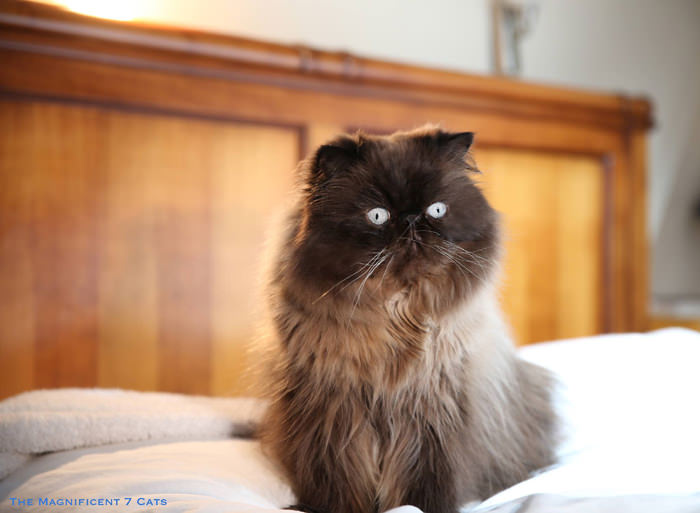 7 Tom M7 for iheartcats 10 Sept 2015