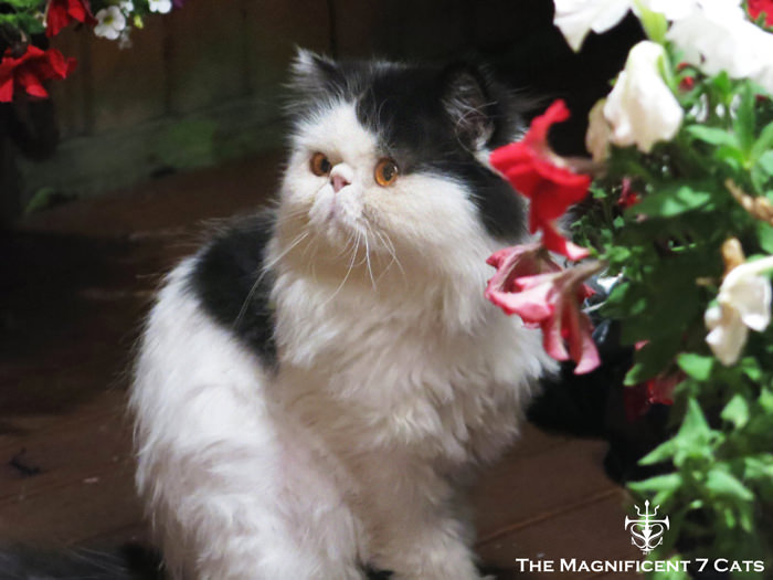NORMAN NIGHT GARDEN IHEARTCATS 14 SEP 2015