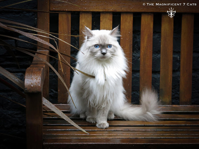 Pixie on wet bench iheartcats 4 Sept 2015