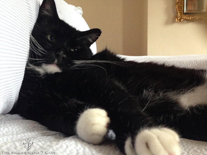 ROCKY IHEARTCATS 14 SEP 2015