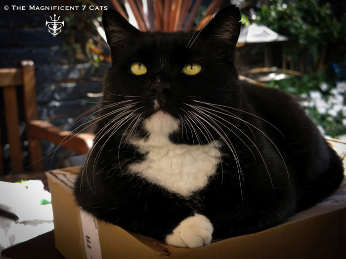 Rocky iheartcats 4 Sept 2015