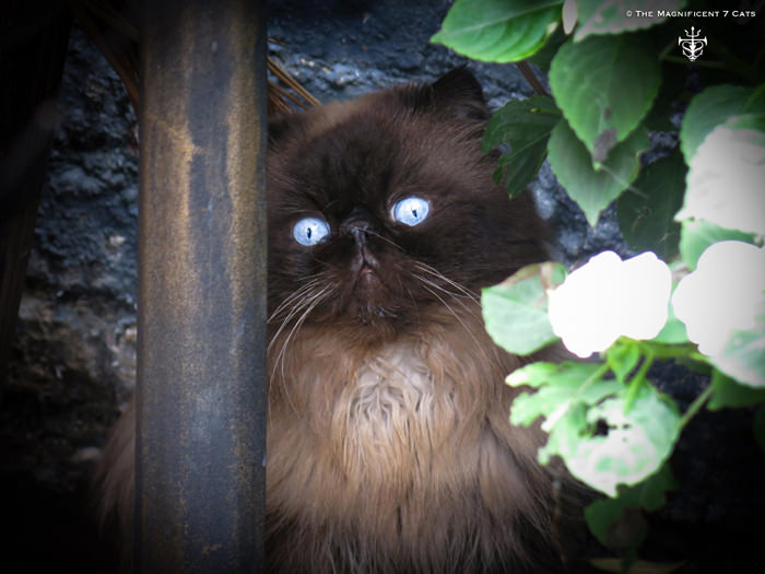 TOM GARDEN IHEARTCATS 14 SEP 2015