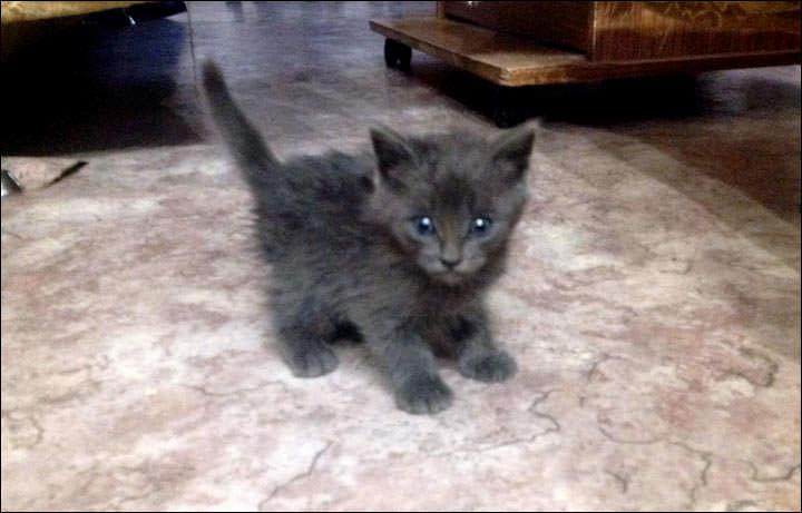 after kitten 2