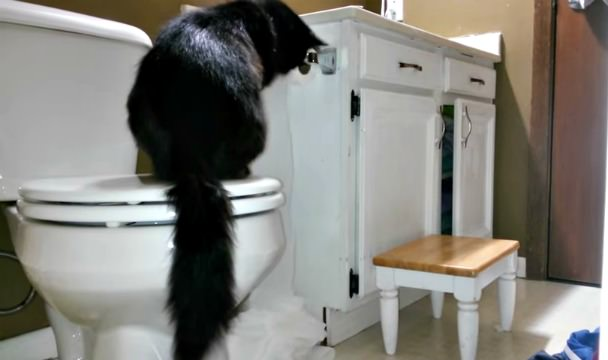 cat eating her poop out of litter box