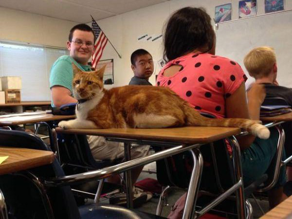 meet-bubba-the-full-time-student-cat-12-photos-10-e1440694988282