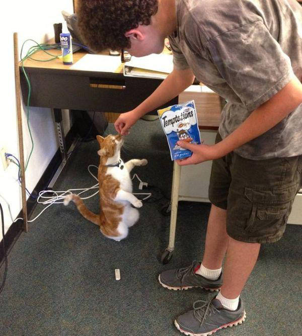 meet-bubba-the-full-time-student-cat-12-photos-9