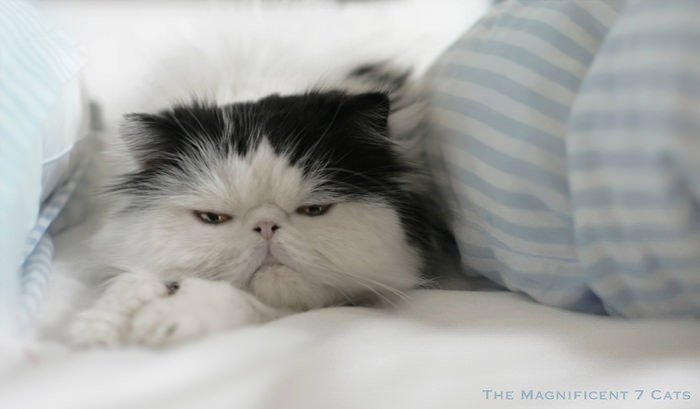 norm in bed iheartcats 28 Sep 2015