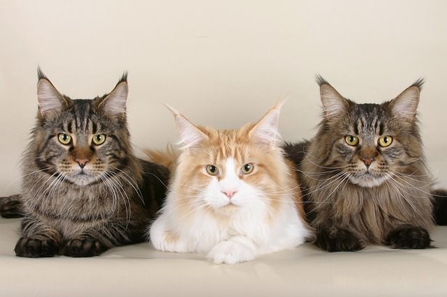 6 cats-535789_640