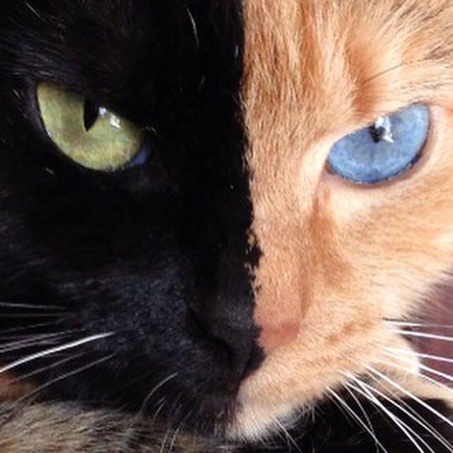 Image source: Venus The Cat