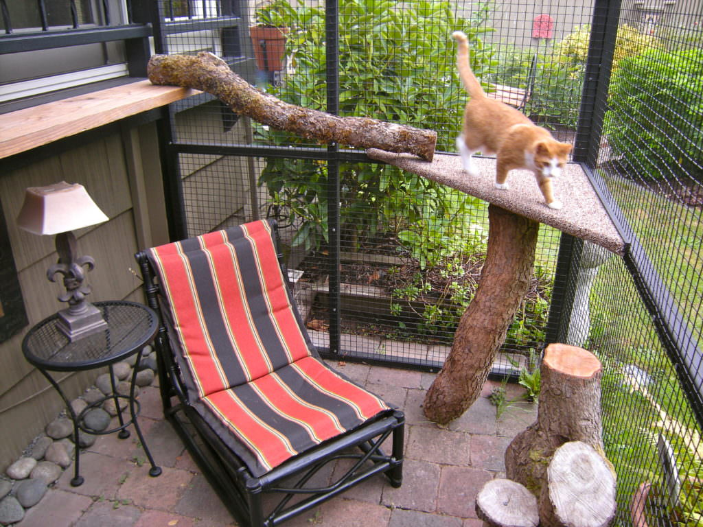 Catio Spaces Helps Cat Owners Build Safe Outdoor Havens