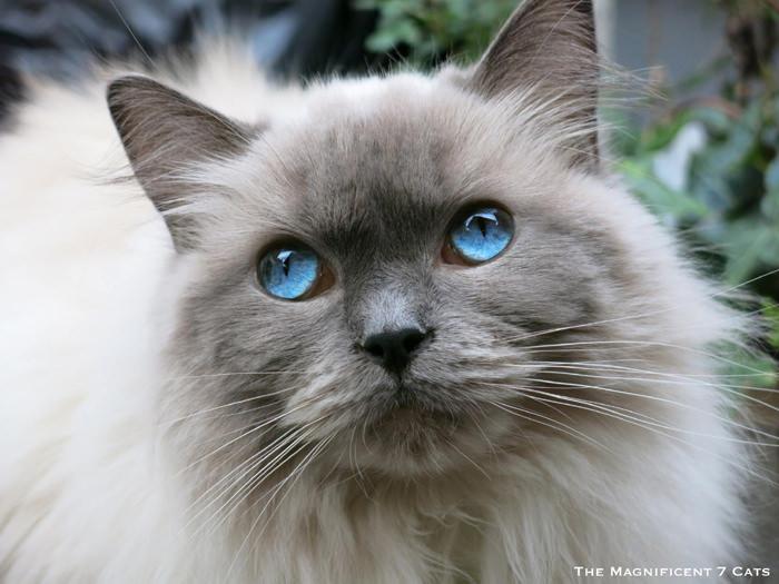 PIXIE iheartcats 15 Oct 2015