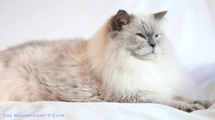 PRINCE 2 M7 iheartcats 1 Oct 2015