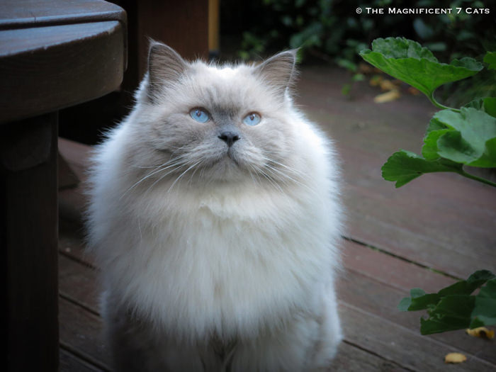 PRINCE M7 iheartcats 1 Oct 2015