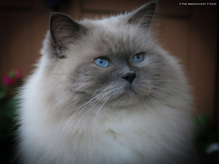 PRINCE iheartcats 15 Oct 2015