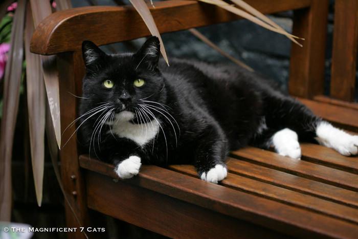 ROCKY iheartcats 15 Oct 2015