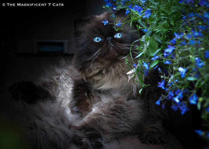 TOM M7 iheartcats 1 Oct 2015
