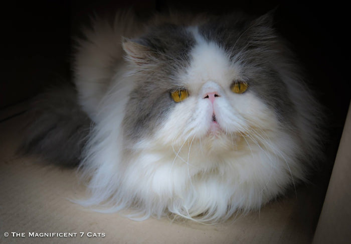 UGS FLUFFY M7 iheartcats 9th Oct 2015