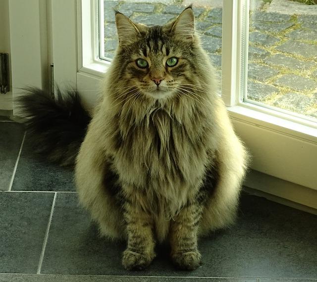 a2 cat-893550_640