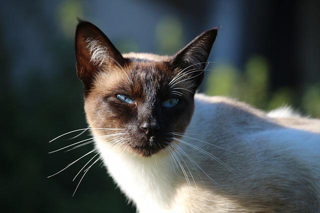 a7 cat-934261_640
