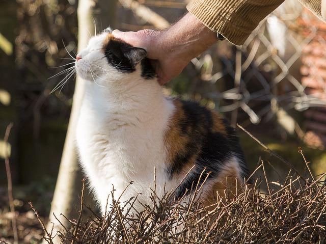 cat-636655_640