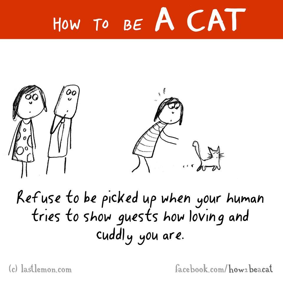 cat guests