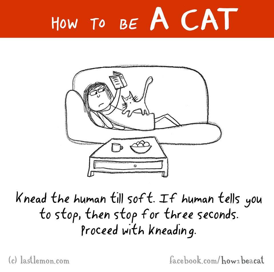 cat knead