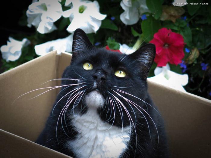iheartcats 26 Oct 2015 Rocky box