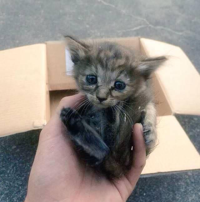kom kitten