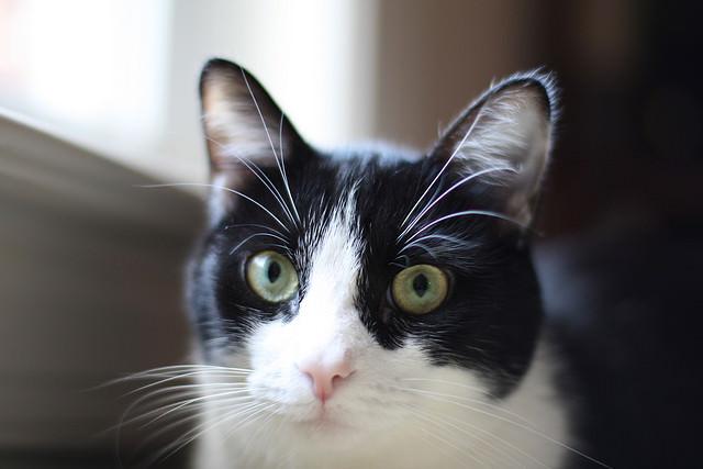 Cats Ears Smell Like Urine