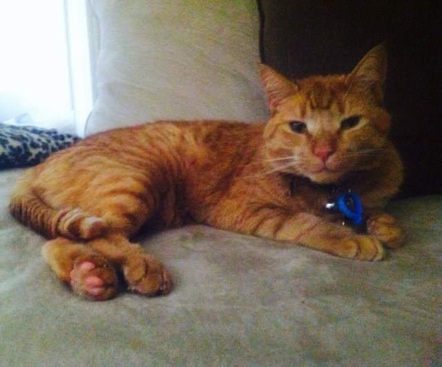 Real Life Garfield Gets Adopted On National Garfield Day