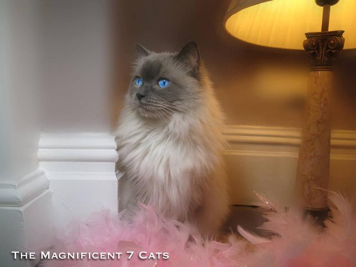M7 iheartcats 10 Nov 2015 pixie 2 lamp