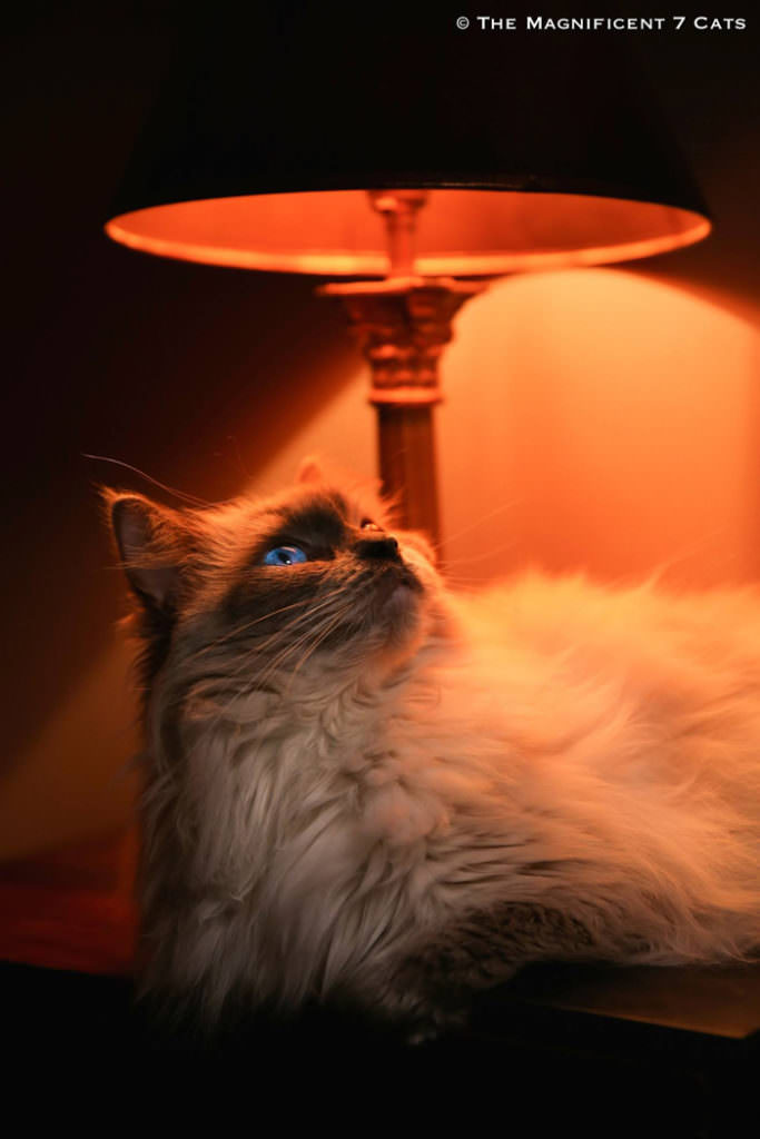M7 iheartcats 17 Nov 2015 Pixie lamp
