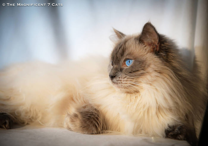 M7 iheartcats 19 Nov 2015 Pixie lady