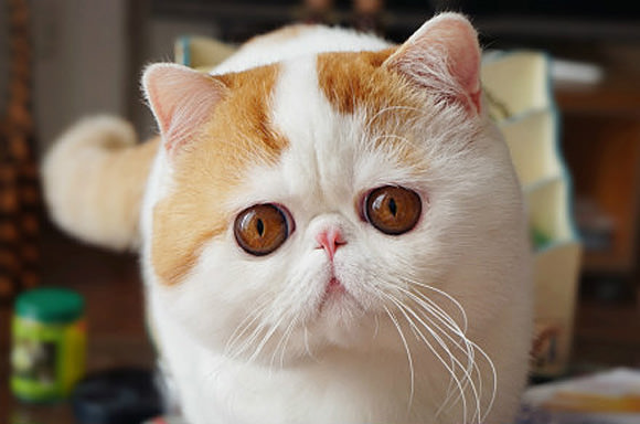 The Celebrity Cats That Rule The Internet Iheartcats Com