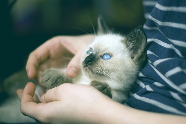 kitten pat