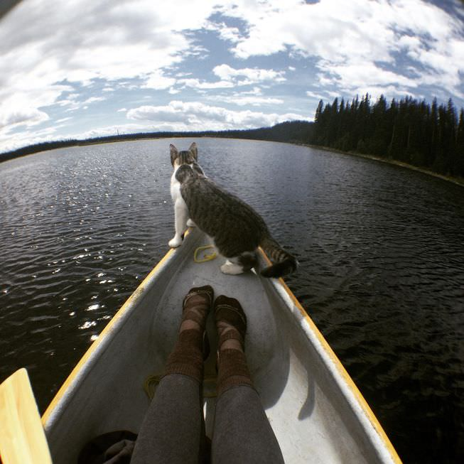 Image source: Adventures Cats