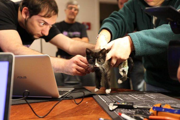 Source: Tiny Tim: Our Rockstar Kitten - Facebook