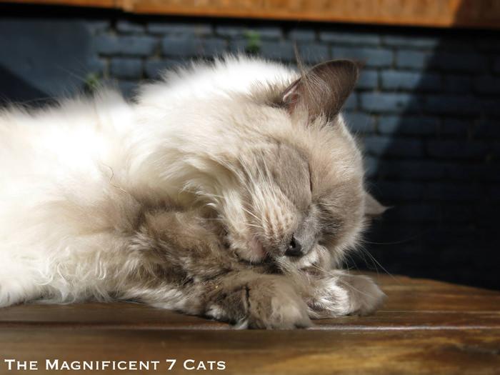 M7 iheartcats 8 Dec2015 Pixie sleeping