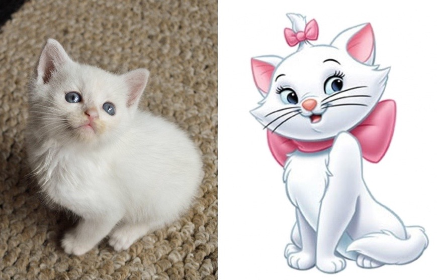 10 cats that look just like disney characters for Jarrones persas