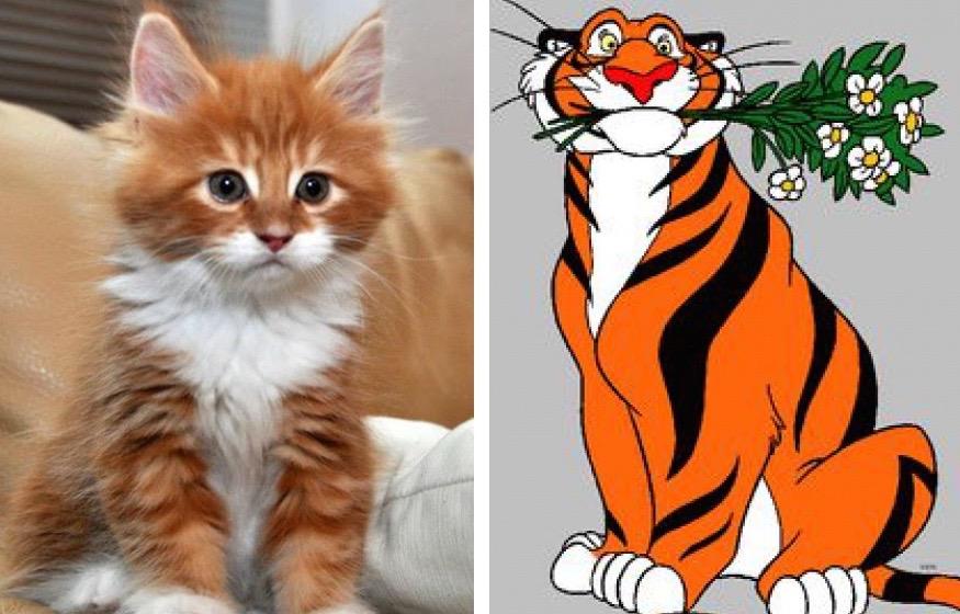 Cat That Looks Like A Lion Cub