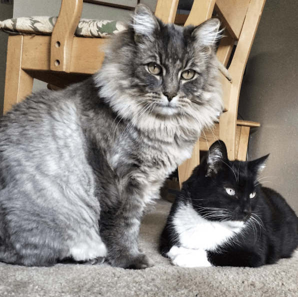 Best House Cats
