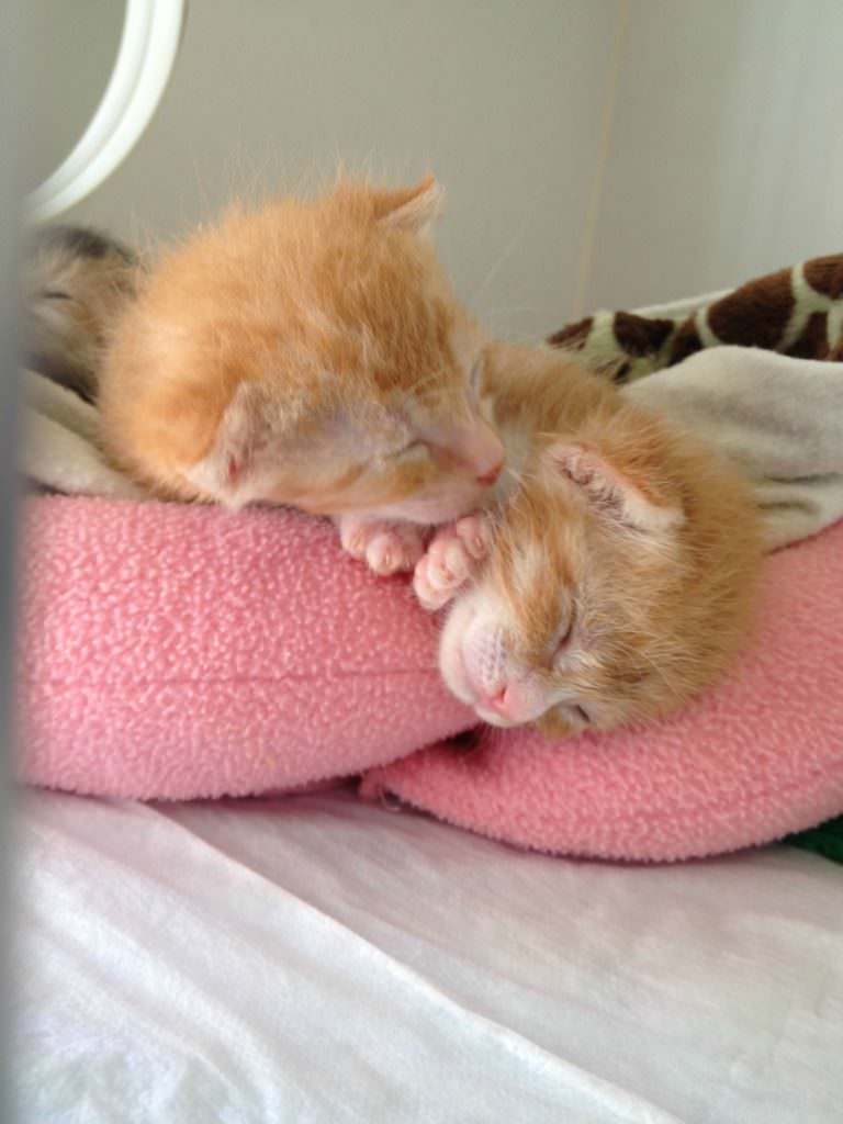Here's some more teeny tiny kitten cuddling. Oh my goodness!!
