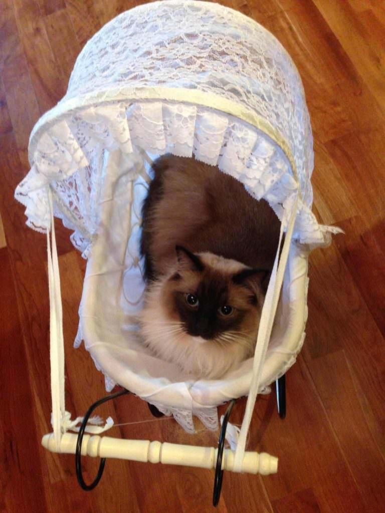 cat carriage